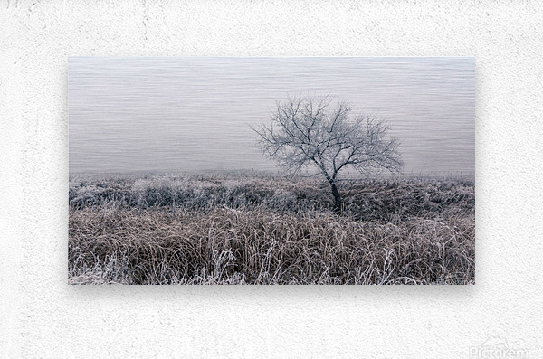 Hoar Frost  Metal print