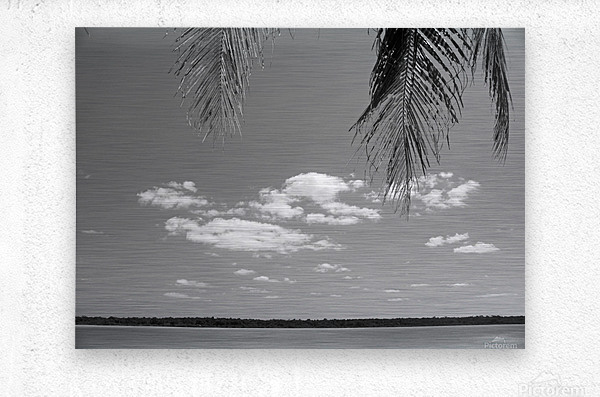 Peeking Palm Tree B&W  Metal print