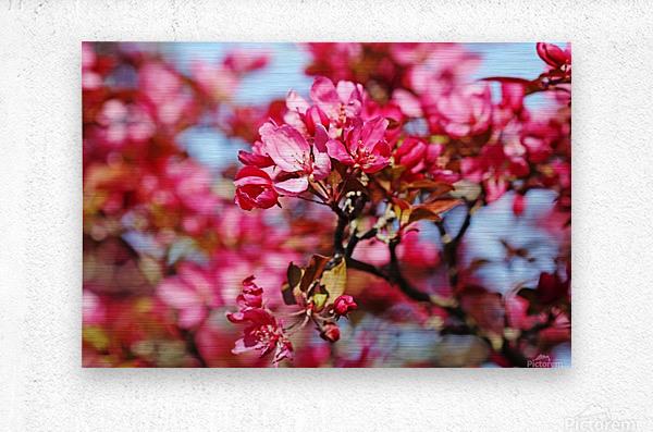 Crabapple Pink  Metal print