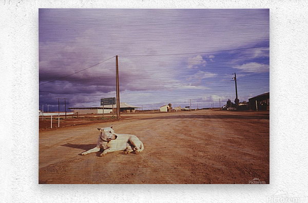 Lone dog in Outback town Australia  Metal print