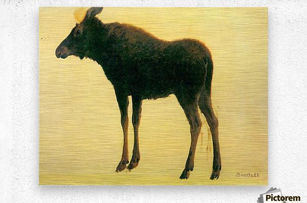 Elk by Bierstadt  Metal print