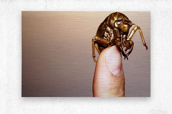 Golden Molt  Metal print