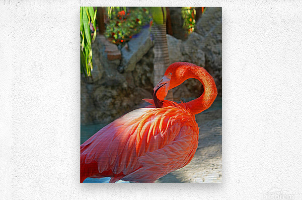 Enjoying the Sun  Metal print