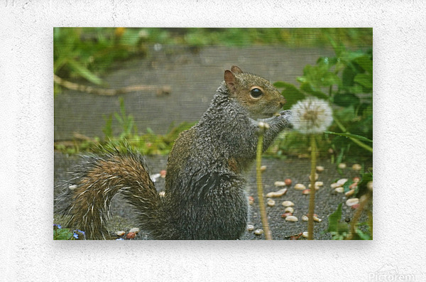Squirrel paw warming  Impression metal