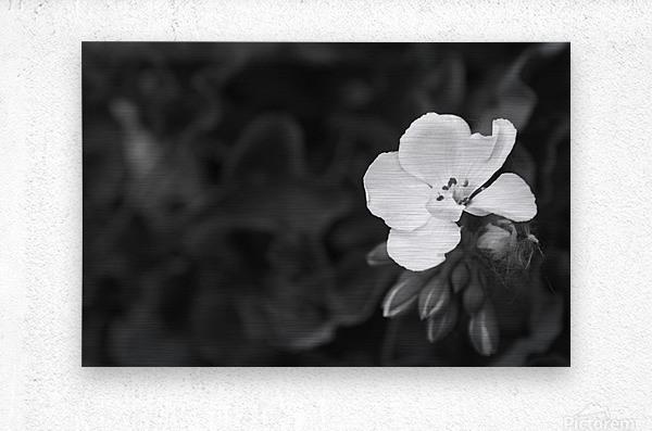 Blooming side flower B&W  Metal print