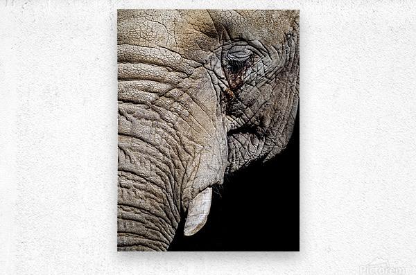 Elephant Close Up  Impression metal