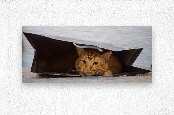 Cat In The Bag  Impression metal