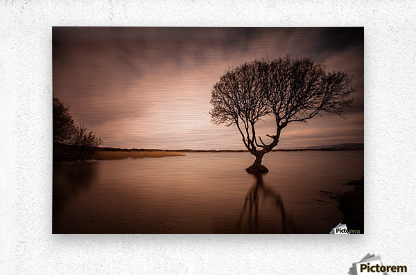 The Kenfig Tree  Metal print