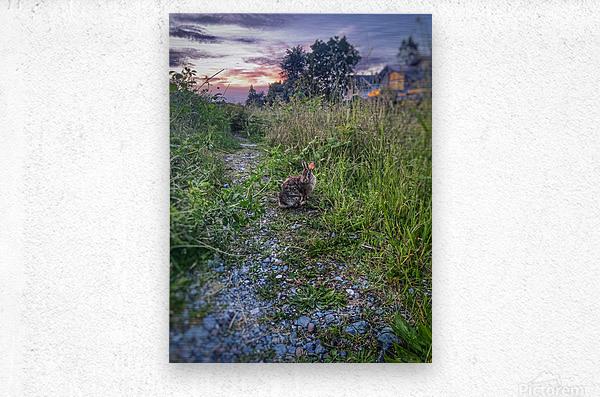 Sunset bunny  Metal print