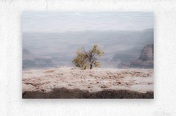 Desert Shrub Grand Canyon 2  Metal print