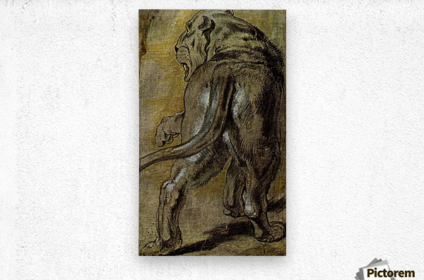 Lion by Rubens  Metal print