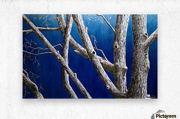 Trees at Dusk  Metal print