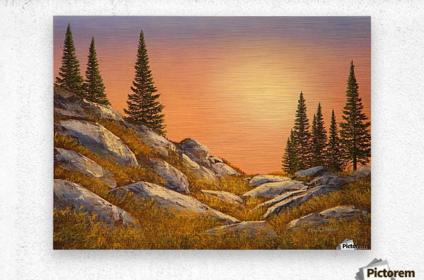 Sunset Spruces  Metal print