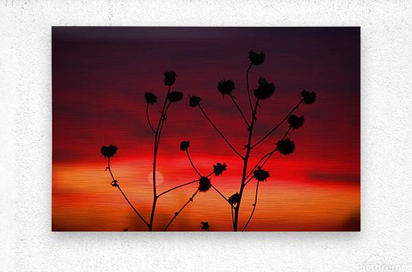 Liberty Sunset  Metal print