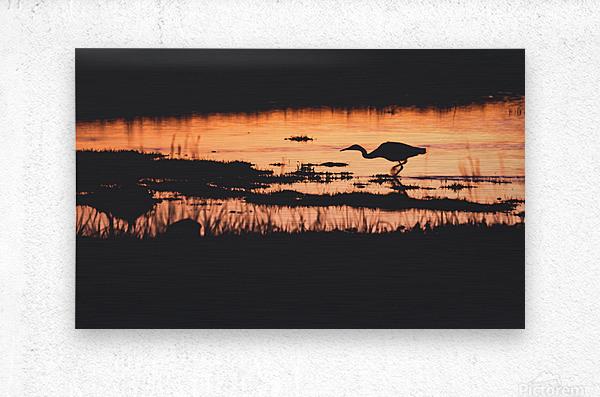 Heron hunt  Metal print