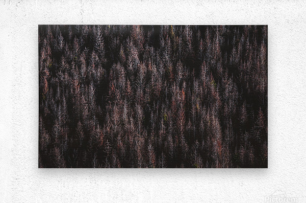 Red forest  Metal print