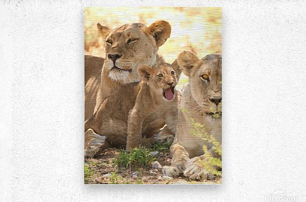 AdriaanPrinsloo 6659  Metal print