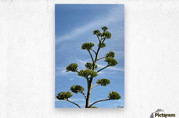 Cacti Mundo 01  Metal print
