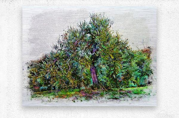 Cascading Olive Tree  Metal print