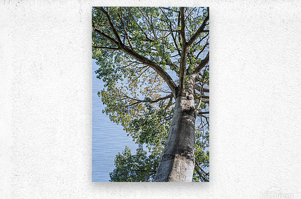 Princess of the Forest - 01  Metal print