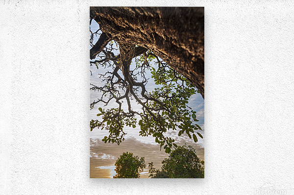 Resilience - Blessing  Metal print