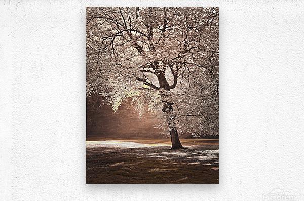 Autumn tree in sunlight  Metal print