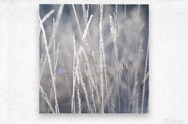 Frost on Grass  Metal print