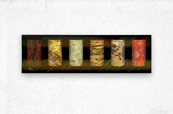 tree bark jungle  Metal print