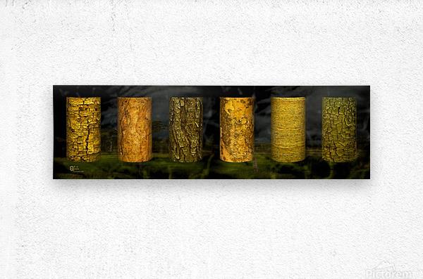 tree bark sentinels  Metal print