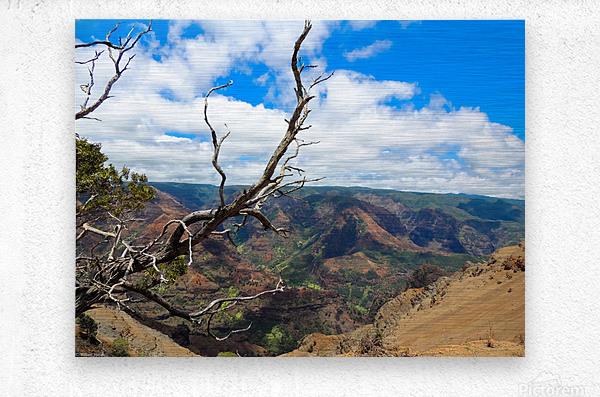 Wild Kauai 2  Metal print