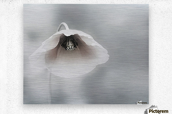 Ephemeral Beauty  Metal print