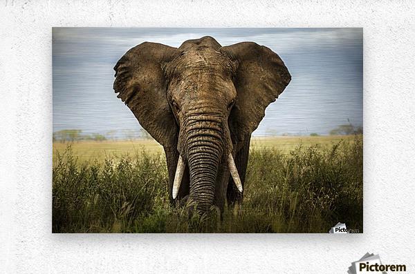 Encounters in Serengeti  Metal print