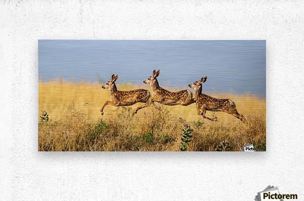 Tripple Jump by verdon    Metal print