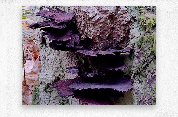 Tiny World 8 of 8 - Mushrooms and Fungi  Metal print