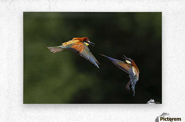 I do not Want You by Marco Redaelli   Metal print