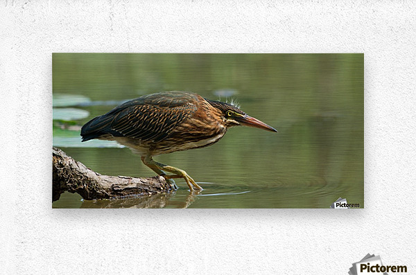 Wading Into The Unknown  Metal print