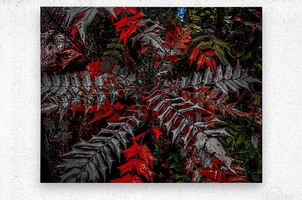 Holly Explosion  Metal print