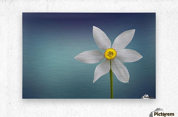 Flower of Paradise by Bess Hamiti   Metal print