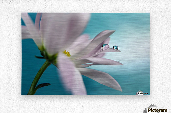 In turquoise Company  Metal print