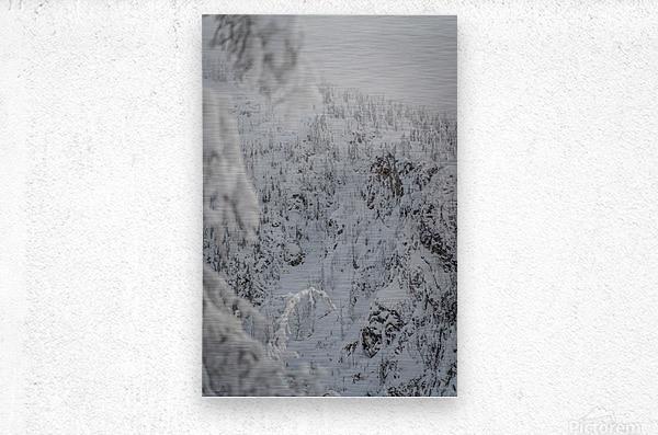 Cowsface wh20 2021  Metal print