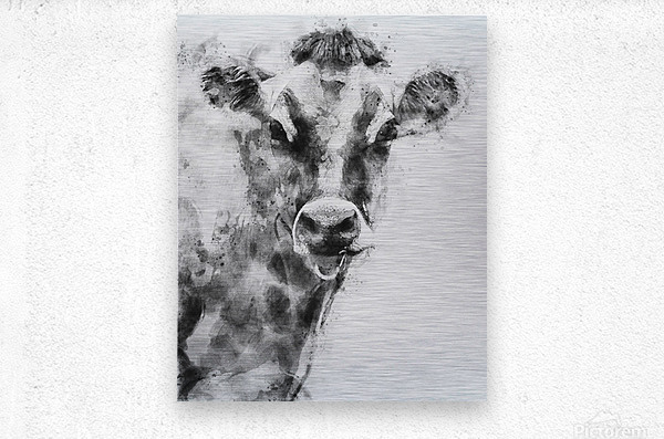 Dairy Cow Black and White  Metal print