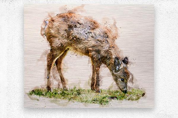 White Tail Deer  Metal print