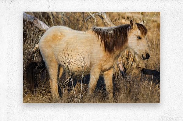 Wild Horse ap 2740  Metal print