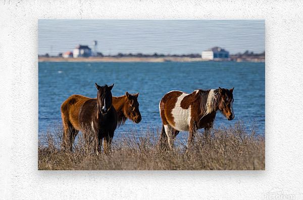 Wild Horses ap 2796  Metal print