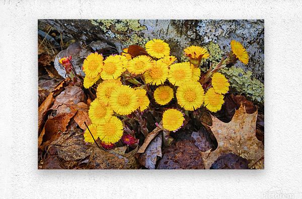 Flowers ap 2222  Metal print