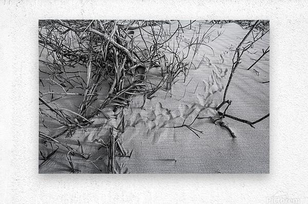 Bird Tracks ap 1605 B&W  Metal print