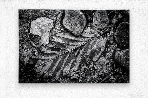 Leaf ap 1931  Metal print