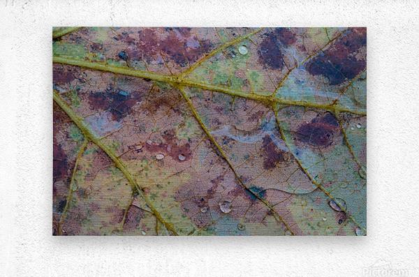 Patterns of Nature ap 1950  Metal print