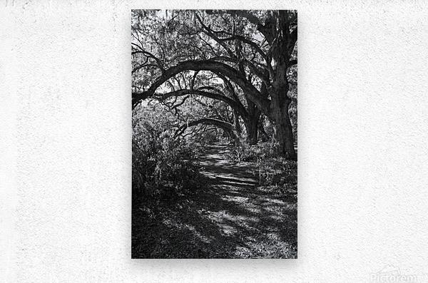Nature Trail ap 2081 B&W  Metal print