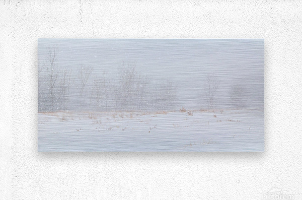 Snow ap 1989  Metal print